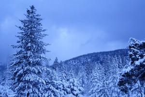 Tahoe_2011_Winter_Snow