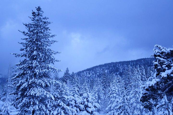 Tahoe_2011_Winter_Snow