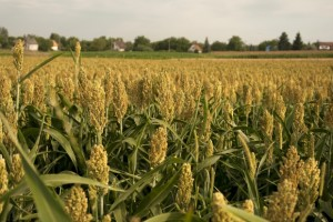 Agriculture, Commodities and Binary Options Trading